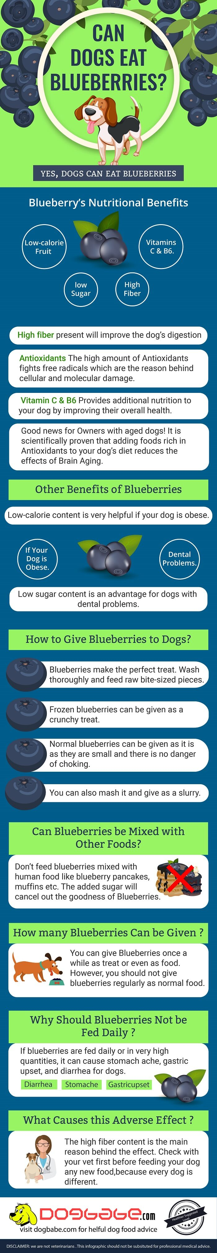 can dogs eat blueberries - infographics