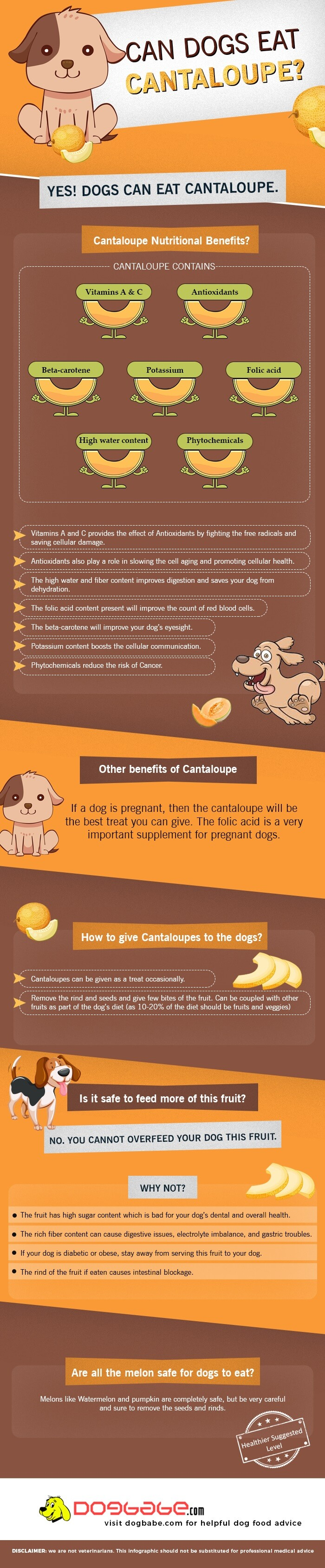 can dogs eat cantaloupe - infographics