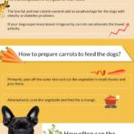 can dogs eat carrots - infographics