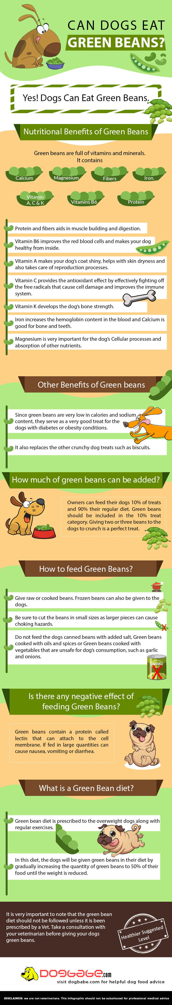 can dogs eat green beans - infographics