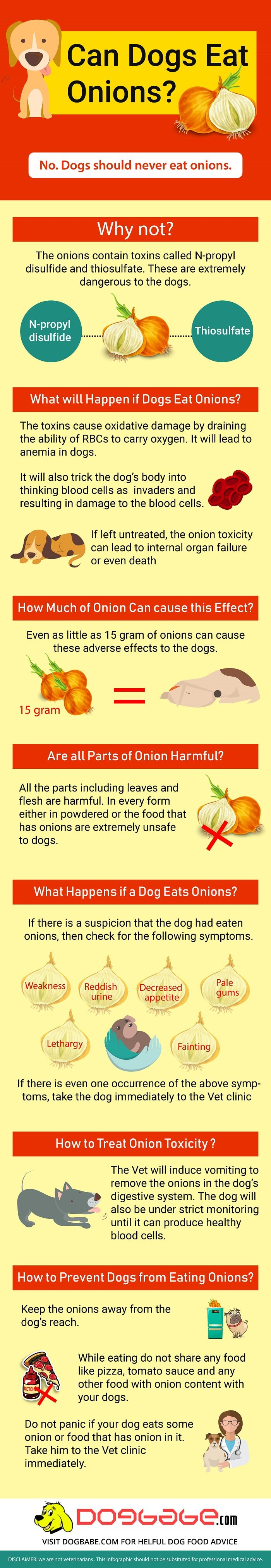 can dogs eat onions - infographics