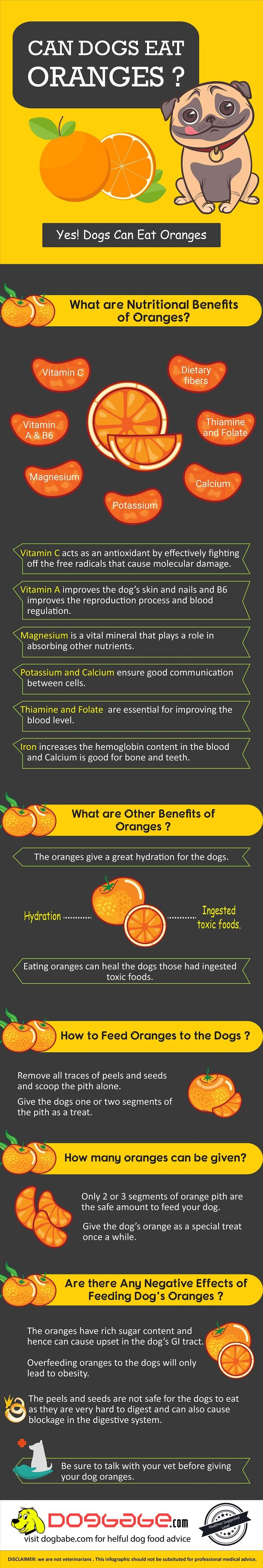 can dogs eat oranges - infographics