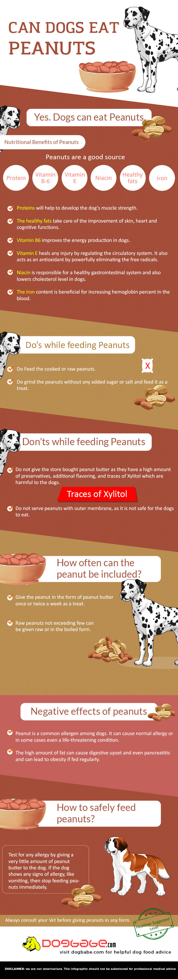 Can dogs eat peanuts infographic