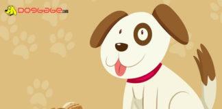 Dogs Eat Peanuts