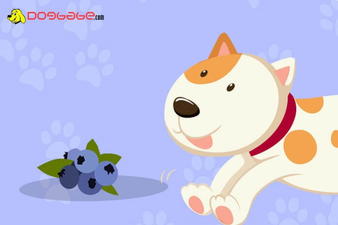 Dogs eat blueberries