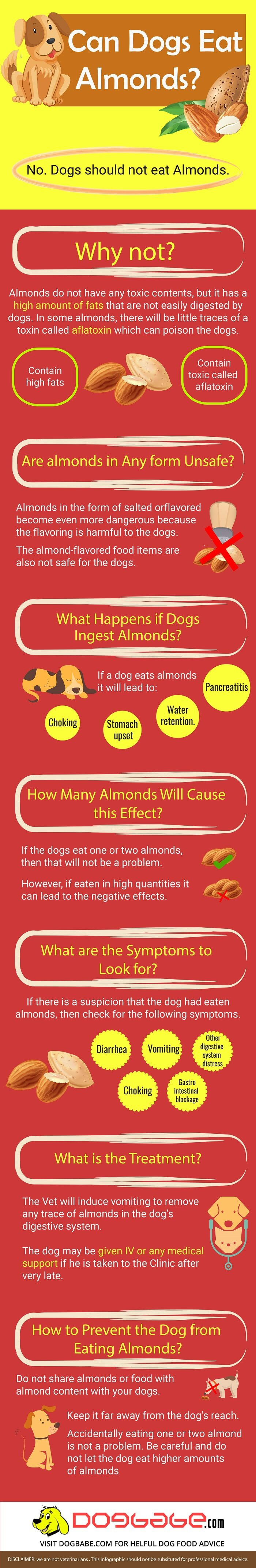 can dogs eat almonds infographic