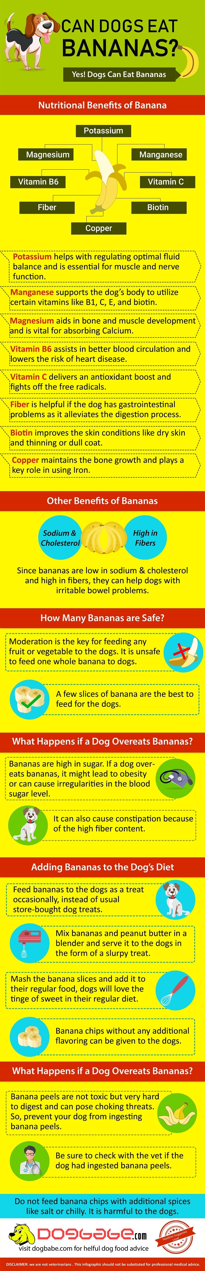 can dogs eat banana infographic