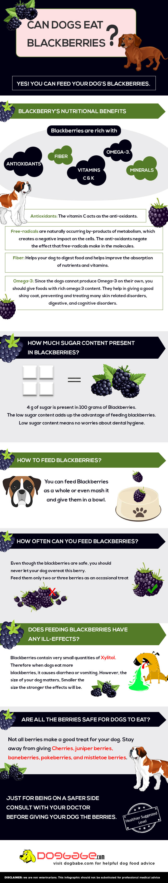 can dogs eat blackberries infographic