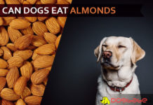 dog eat almond