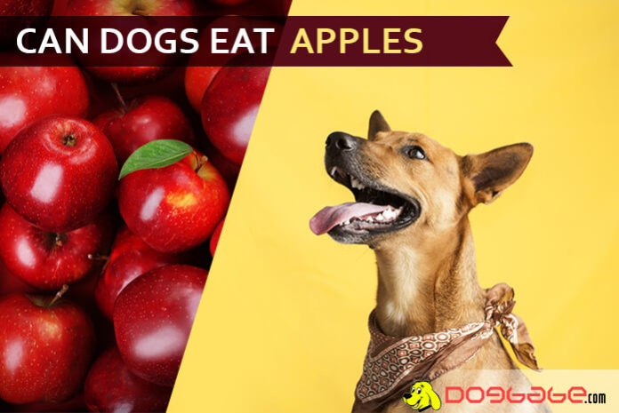 dog eat apple