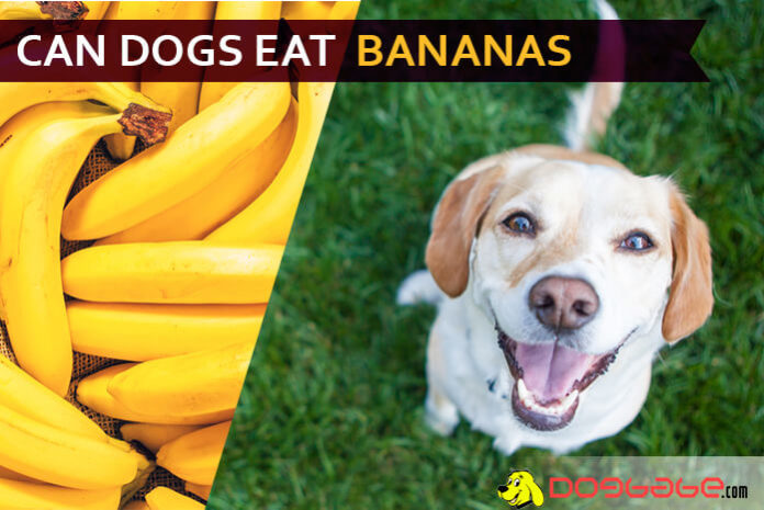 dog eat banana