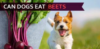 dog eat beets