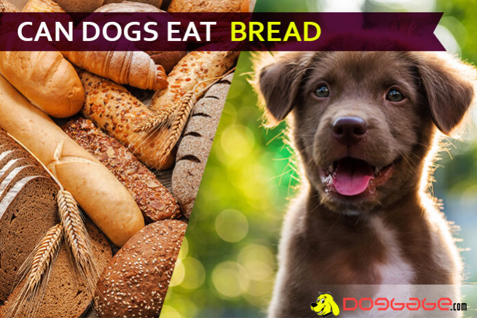 dog eat bread