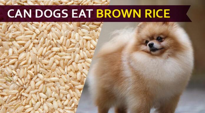 dog eat brown rice