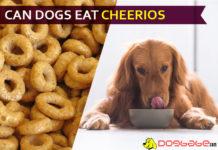 dog eat cheerio