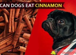 dog eat cinnamon