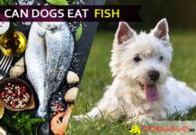 dog eat fish
