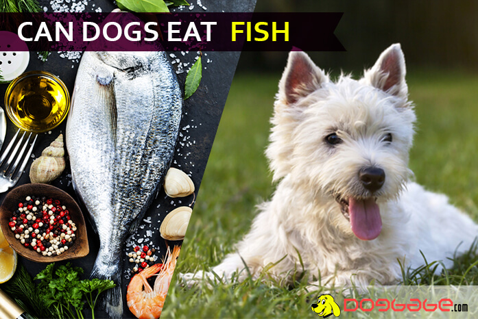 Can Dogs Eat Fish Is It Okay To Feed Fish To Dogs Read This Before