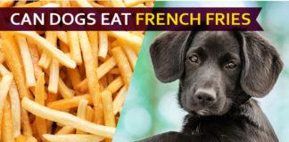 dog eat french fries