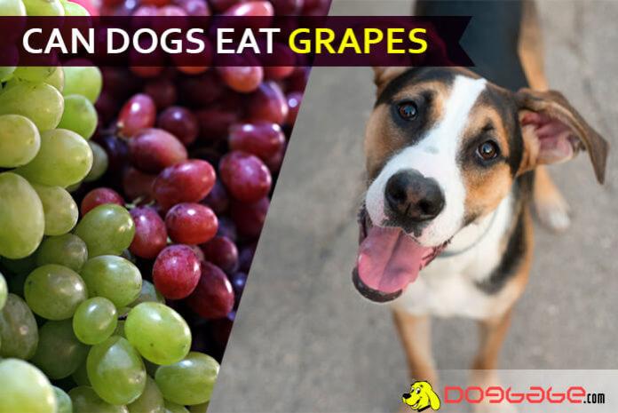 dog eat grape