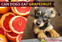 dog eat grapefruit