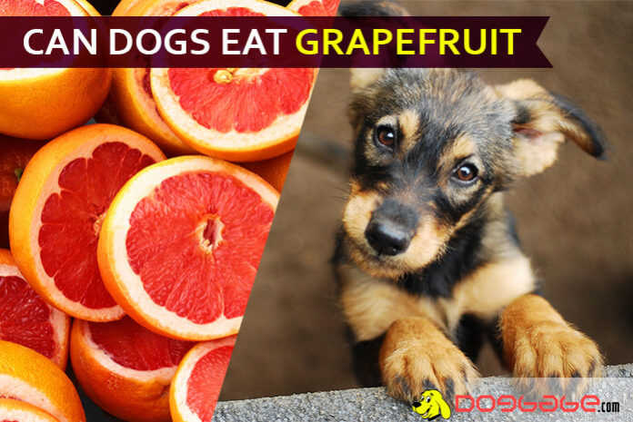 dog eat grapefruit