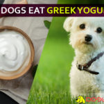 dog eat greek yogurt