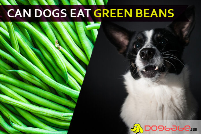 dog eat green bean