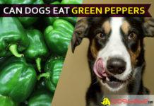 dog eat green pepper