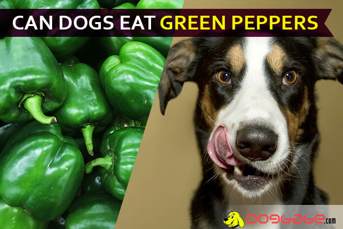 Can You Add Bell Peppers To Your Dog S Diet Can Dogs Eat Green Peppers