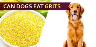 dog eat grit