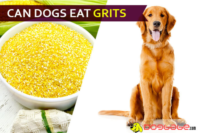 dog eat grit