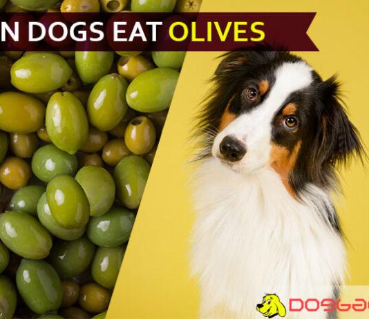 dog eat olive