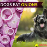 dog eat onions