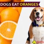 dog eat orange