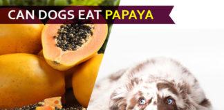 dog eat papaya