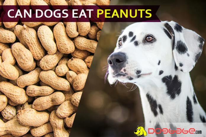 dog eat peanut