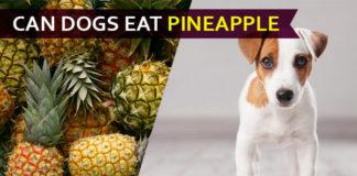 dog eat pineapple