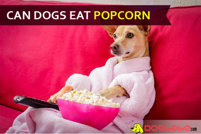 dog eat popcorn