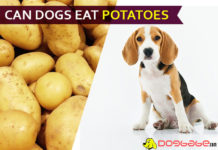 dog eat potatoe