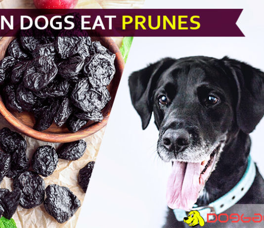 dog eat prune