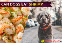 dog eat shrimp