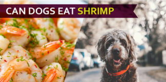 dog eat shrimp