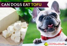 dog eat tofu