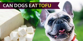 dog eat tofu