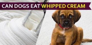 dog eat whipped cream