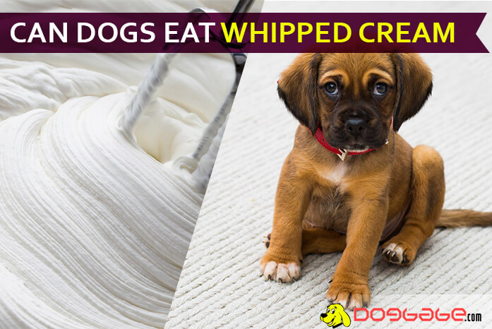 Whipped Cream For Your Dog Can Dogs Eat Whipped Cream Beware
