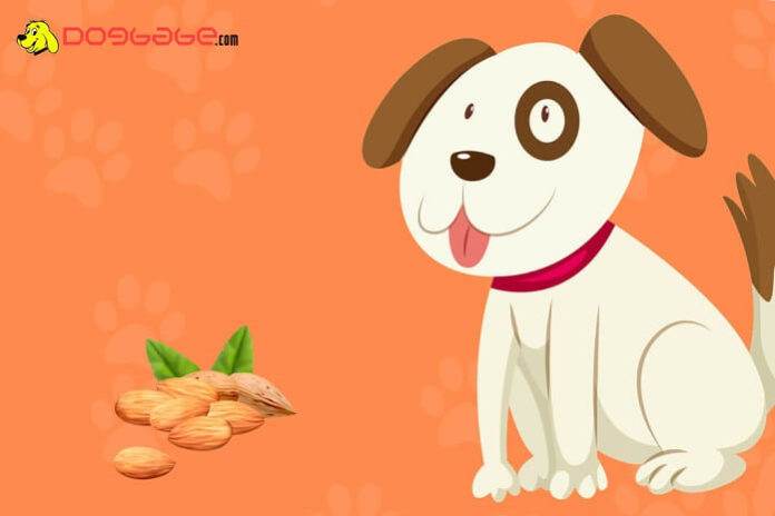 dogs eat almonds