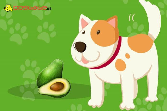 dogs eat avocado