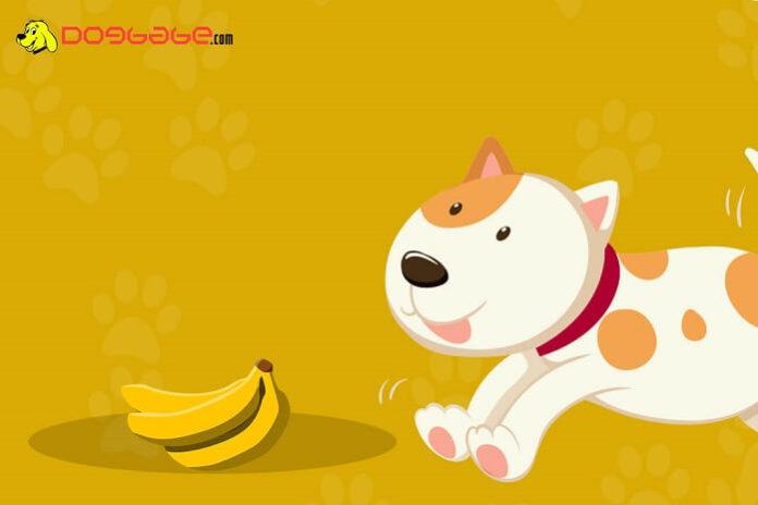dogs eat bananas